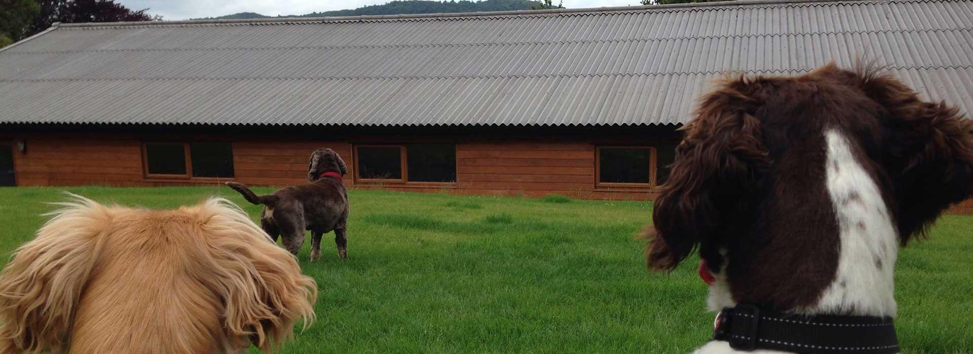 Dog Day Care Ulverston